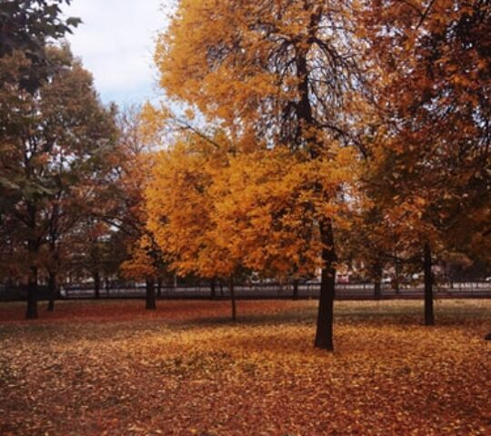 Parcul Izvor, București